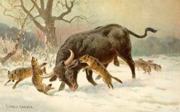 Painting of an Aurochs from Wikipedia